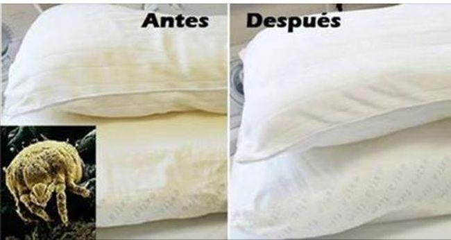 lavar almohadas