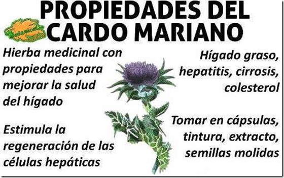 cardo-mariano-propiedades-medicinales