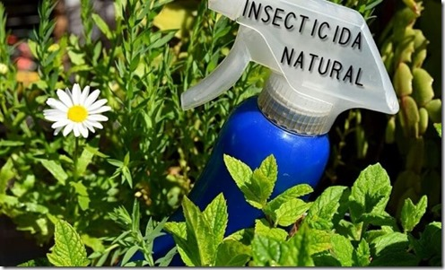 AJO INSECTICADA